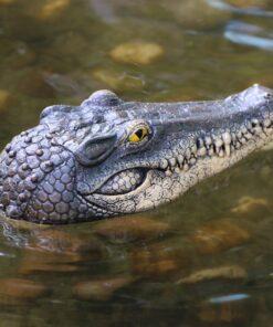 Krokodil Kopf, ferngesteuertes Krokodil-Boot, Schweiz,